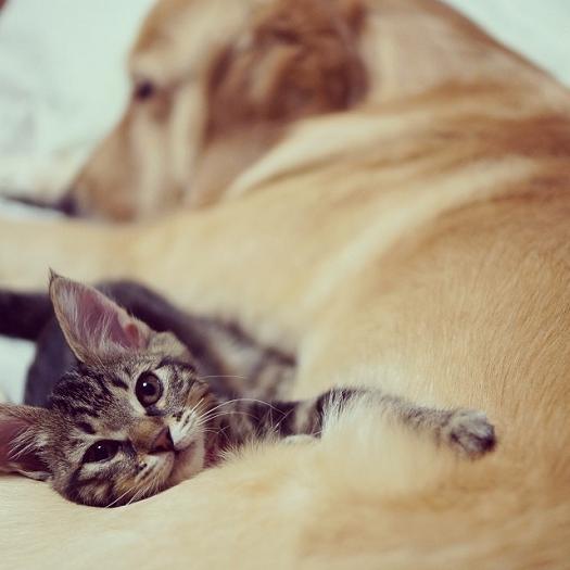 عکس سگ و گربه